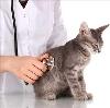 Ветеринарные клиники в Луховицах